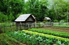 Неприхотливые растения для ленивых огородников